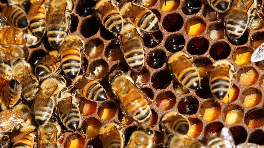 1 million bees euthanized after California truck crash