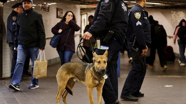 Police officers and a police dog patrol near the passageway connecting New York City's Port Authority bus terminal and the Times Square subway station Tuesday, Dec. 12, 2017, near the site of Monday's explosion. Commuters returning to New York City's subway system on Tuesday were met with heightened security a day after a would-be suicide bomber's rush-hour blast failed to cause the bloodshed he intended. (AP Photo/Seth Wenig)