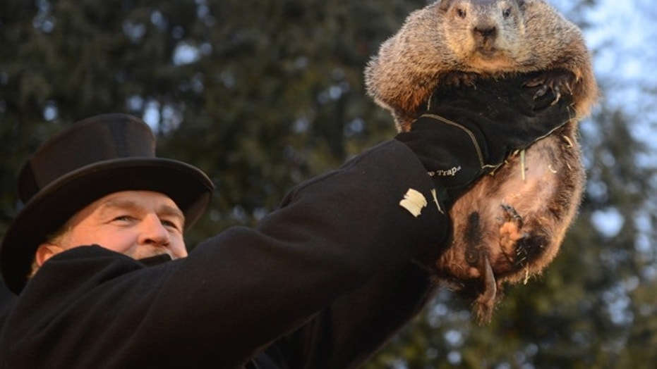 Handler John Griffiths introduces Punxsutawney Phil to the crowd at Gobbler's Knob on the 131st Groundhog Day in Punxsutawney, Pennsylvania, U.S. February 2, 2017.