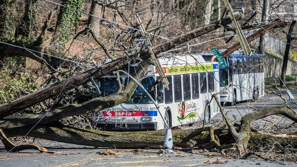 A bus is covered by a tree that collapsed onto power lines due to a storm last Friday in Bryan Mawr, Pa., Sunday, March 4, 2018. The road is closed until crews can clean the mess. (Michael Bryant/The Philadelphia Inquirer via AP)