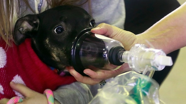 Make Sure Your Local Fire Department Has These Pet-Saving Kits