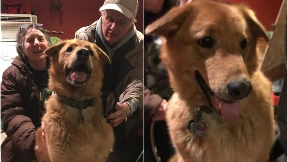 Retriever Beowolf reunites with his owners on April 3, 2018 after disappearing in the wilderness for nearly a year.