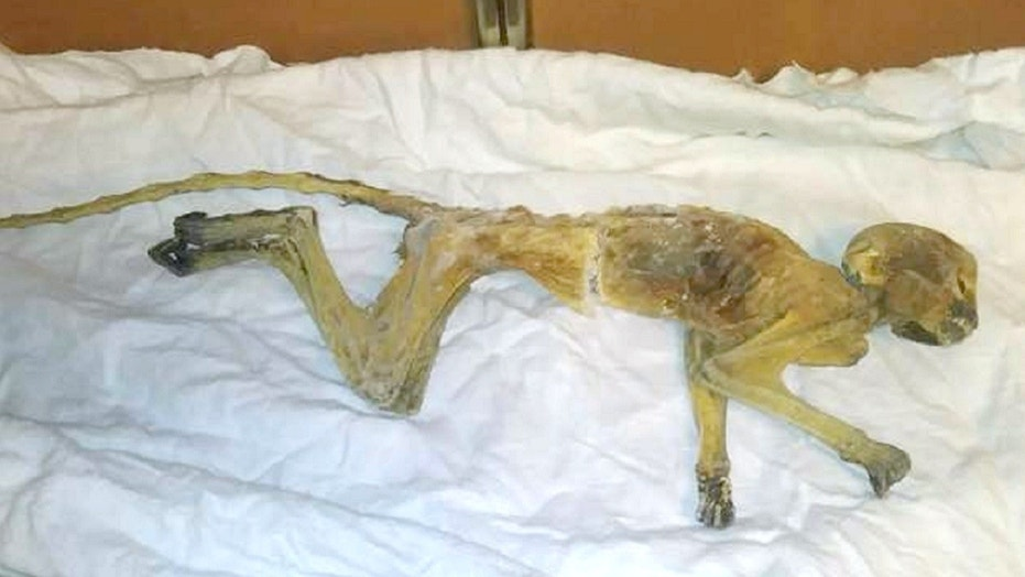 Crews found a mummified monkey last week in an air duct on the seventh floor of Dayton's store in Minneapolis.