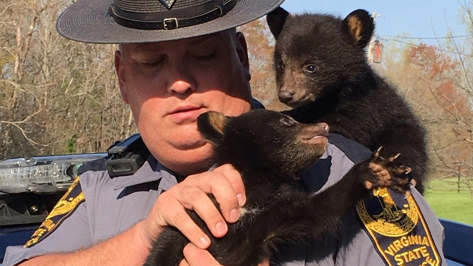 A Virginia State Trooper rescued two black bear cubs on Thursday after their mother was struck and killed by a vehicle.