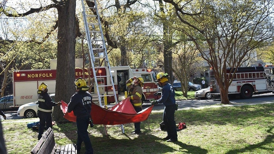 The unidentified man, who may have been a friend of the pet owner, climbed the tree at around 9:30 a.m. but became trapped after he climbed up past his ladder, about 30 feet up.