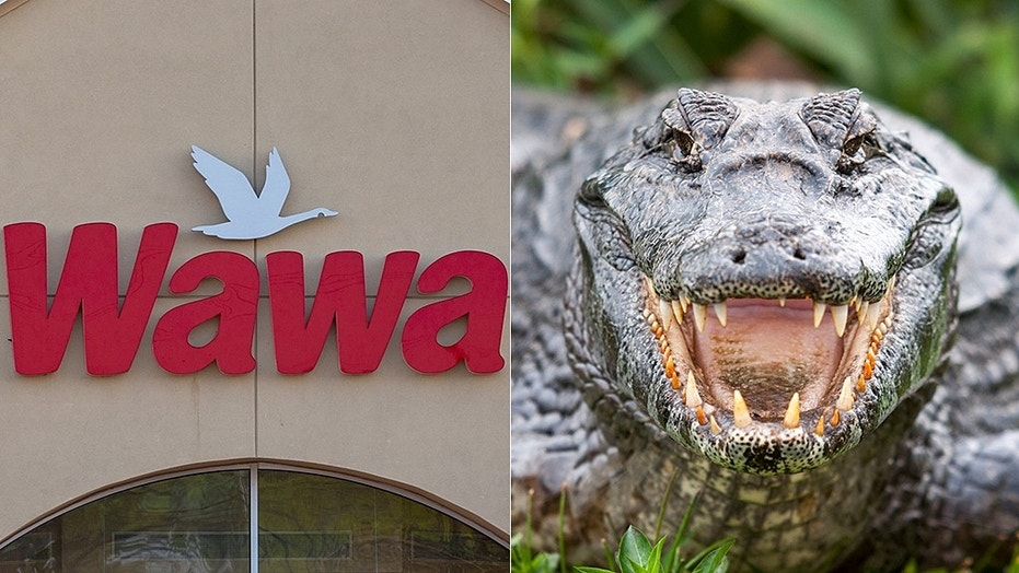 Two people are sought after an alligator was dumped in a Florida Wawa.