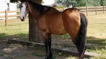 Real horse cropped