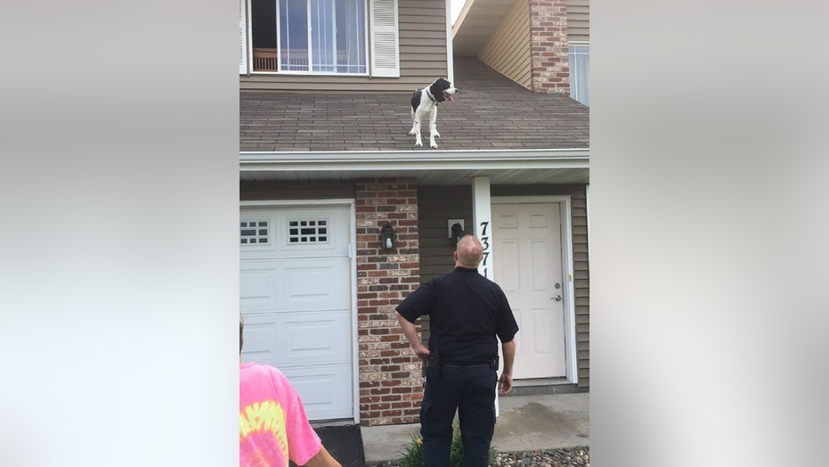 "A dog was ""safely returned inside"" after it got stuck on the roof of a townhome Thursday morning, police in Minnesota said."