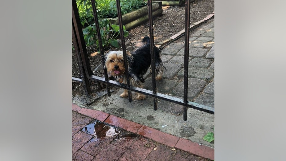Police are warning pet owners to be vigilant this summer after freeing a panting Yorkie from a scorching hot vehicle in Washington, D.C. this week.