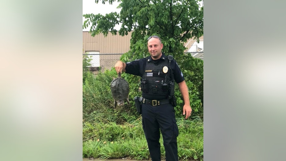 Police in Orrville, Ohio, rescued a turtle stuck in a drain that contributed to some intense flooding following a storm.
