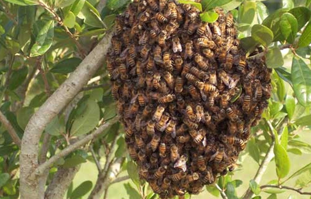 California woman covered 'head to toe' with bees in critical condition after attack