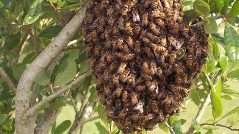 The California resident was attacked by 80,000 bees