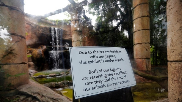 REMOVES NUMBER OF FOXES ATTACKED - A sign at the jaguar Jungle exhibit is seen at the Audubon Zoo in New Orleans, Monday, July 16, 2018. The death of a wounded fox brings to nine the number of animals that have died as the result of the weekend escape of a jaguar from its enclosure at the zoo in New Orleans. Audubon Zoo officials say on the zoo's website that Rusty, one of the foxes attacked by the big cat, died Monday. (AP Photo/Gerald Herbert)
