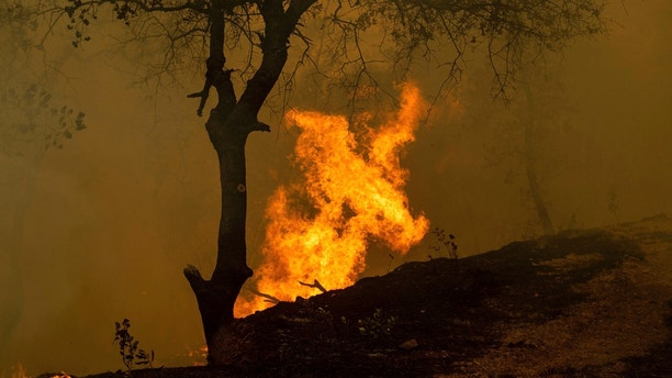 Flames from a backfire, set by firefighters trying to contain the Carr Fire, burn in Redding, Calif., on Saturday, July 28, 2018. (AP Photo/Noah Berger)