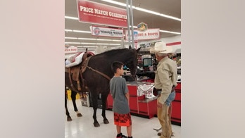 horse in store