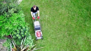 Overhead shot of gardener mowing lawn by shrubbery border.