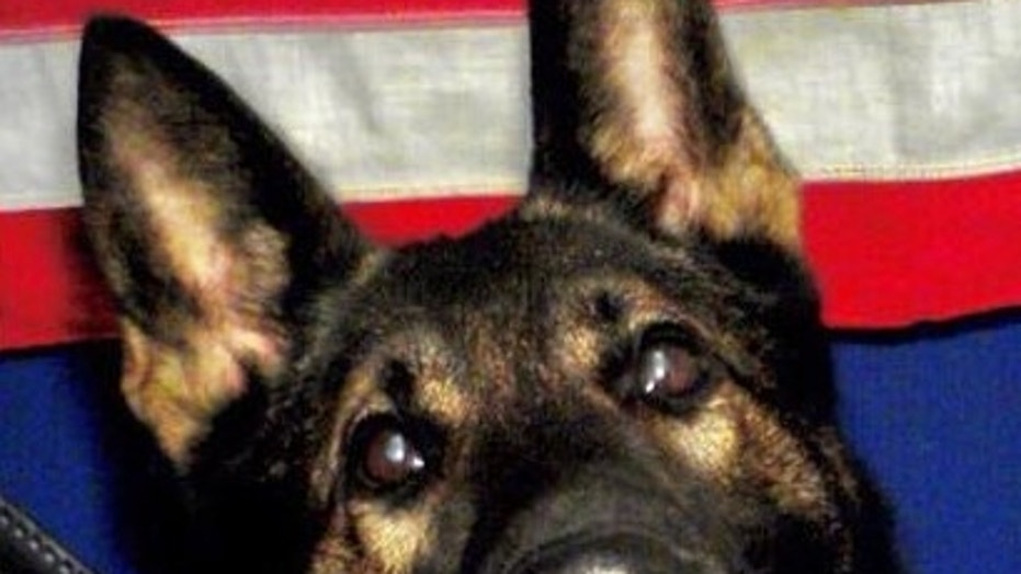 K-9 Fang, a 3-year-old German Shepherd who worked with the Jacksonville Sheriff's Office in Florida, was fatally shot Sunday in the line of duty.
