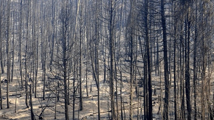 Fire damaged forest land along Camp May Road west of Los Alamos, N.M, caused by the Las Conchas Fire,  Friday July 1, 2011 near Los Alamos, N.M. . (AP Photo/Albuquerque Journal, Dean Hanson) THE SANTA FE NEW MEXICAN OUT