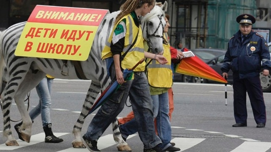 Sept. 3: A policeman watches a horse painted as zebra at a crossing at a highway in downtown Moscow, Russia. Moscow traffic policemen on Friday were teaching children to cross the road safely with the use of horses and ponies painted as zebras. (AP)