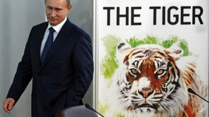 Nov. 23: Russian Prime Minister Vladimir Putin attends the International Tiger Forum in St.Petersburg, Russia.