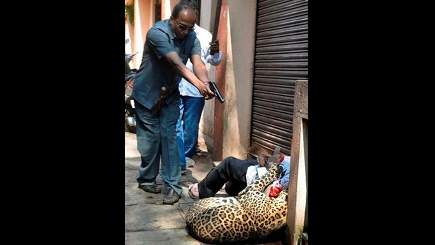 In this photo taken Sunday, Jan. 9, 2011, an Indian police officer shoots a leopard as it attacks a bystander in Karad, Maharashtra, India. The leopard had already injured a number of people in the rampage when police shot the animal, local media reported. It is still not clear where the leopard came from.