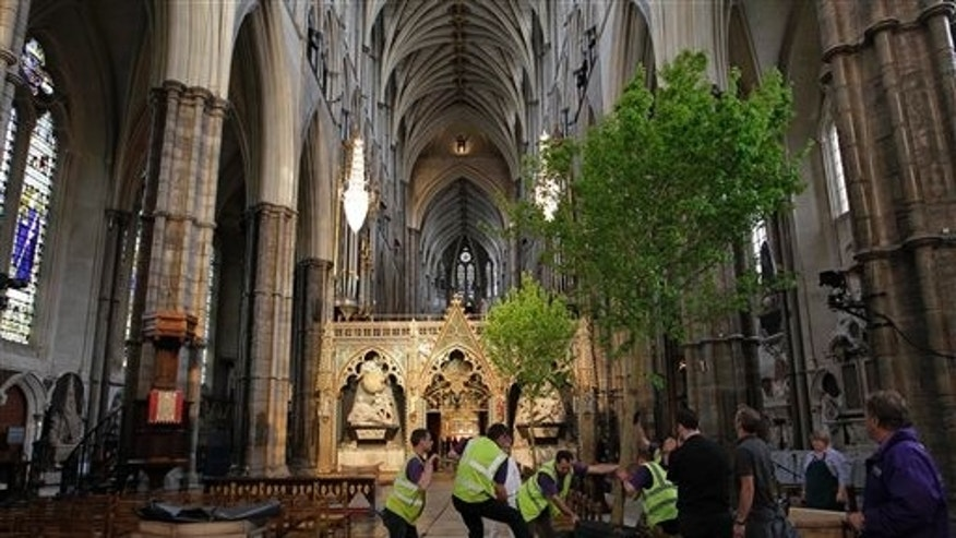 April 26: Workers put up an English field maple tree in Westminster Abbey in London in preparation for the royal wedding. Prince William and Kate Middleton are to marry in Westminster Abbey on April 29. (AP)
