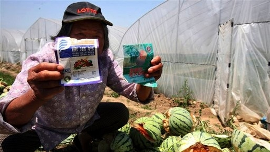 May 13: A farmer holds up the packaging for chemicals used on watermelons that had burst in Danyang city in eastern China.