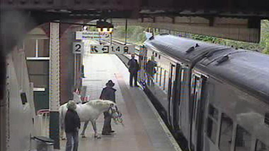 In this image released Wednesday May 18, 2011, by Arriva Trains Wales, showing an unidentified man as be attempts to board a train with a pony, for a journey from Wrexham to Holyhead, Wales, on Saturday May 14, 2011.  The man attempted to buy a ticket for himself and the pony before taking the animal into a lift to get to the train platform, but was stopped from boarding the train. The man left the station on foot and it is not known how he continued the journey of nearly 100 miles. (AP/Arriva Trains Wales)