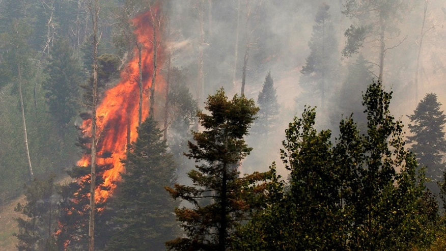 June 29: A tree burns during the Las Conchas fire near Los Alamos, N.M. As crews fight to keep the wildfire from reaching the country's premier nuclear-weapons laboratory and the surrounding community, scientists are busy sampling the air for chemicals and radiological materials. (AP Photo/Jae C. Hong)