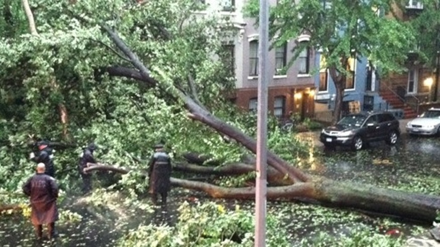 Aug 28: Tree down in Brooklyn, New York.