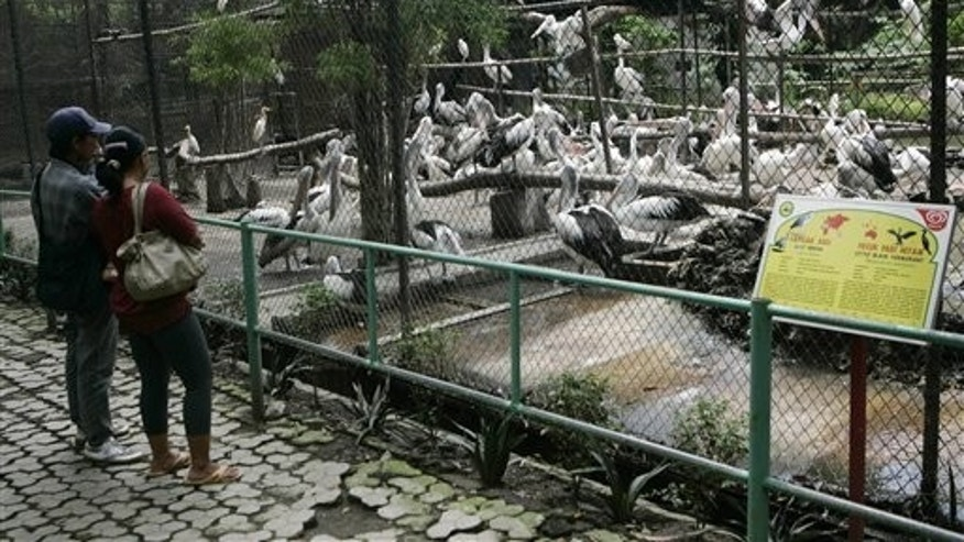 March 7: Visitors view at least three different species of birds, Australian pelicans, gray herons and black cormorants inside a 49x65 ft cage at Surabaya Zoo in Surabaya, East Java, Indonesia.
