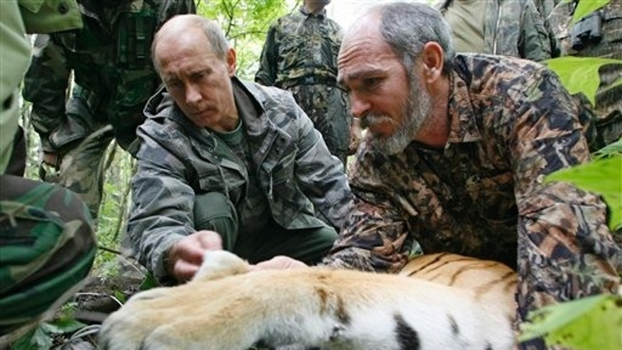 Aug. 31, 2008: Prime Minister Vladimir Putin, left, looks at the tranquilized five-year-old Ussuri tiger as researchers put a collar with a satellite tracker on the animal in a Russian Academy of Sciences reserve in Russia's Far East.