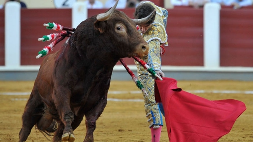 Spanish bullfighter Jose Tomas performs during a bullfight at the Valladolid bullring, in Spain, Thursday, Sept. 8, 2011.