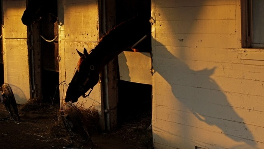 A horse is seen in it's stable as the sun rises at Churchill Downs Thursday, May 3, 2012, in Louisville, Ky. (AP Photo/Charlie Riedel)