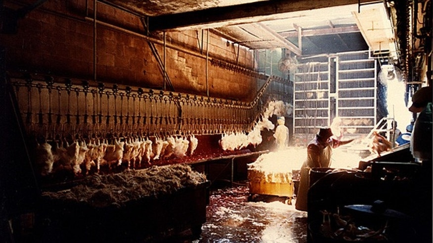 Photo of poultry workers by Keith Tsubata from Hawaii.