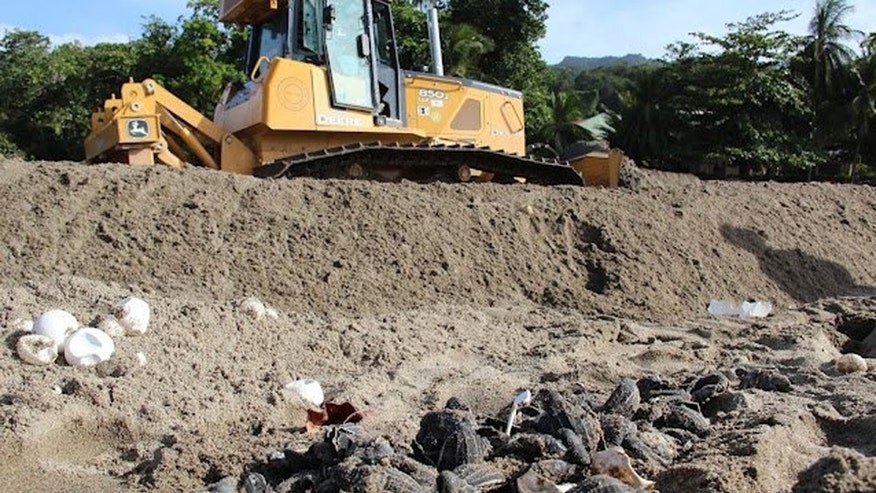 July 8, 2012: A Ministry of Works employee operates a bulldozer next to destroyed leatherback turtle eggs and hatchlings on the shore of the Grande Riviere Beach, Trinidad.