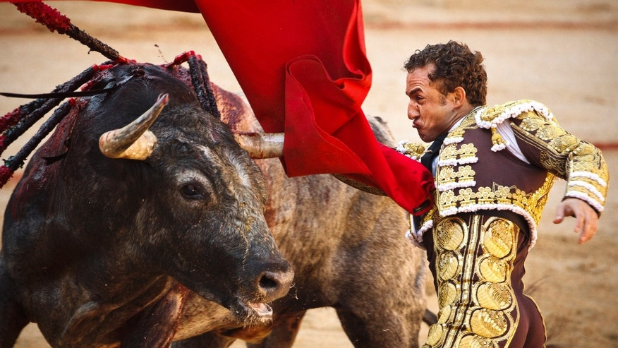 Spanish bullfighter Rafaelillo performs with a Miura's ranch fighting bull during a bullfight of the San Fermin festival, in Pamplona, Spain, Sunday, July 8, 2012 in Pamplona, Spain. (AP Photo/Daniel Ochoa de Olza)