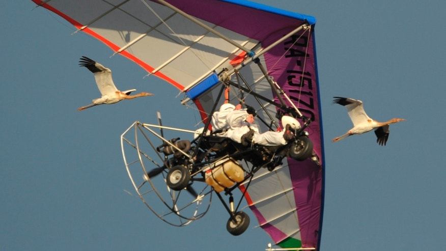 Sept. 5, 2012: In this photo Russian President Vladimir Putin flies in a motorized hang glider alongside two Siberian white cranes, on the Yamal Peninsula, in Russia.
