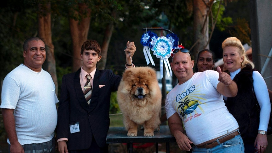 Nov. 25, 2012 The Aguiar family shows off their chow chow dog, Paco, who won a prize in the puppy category at the Fall Canine Expo in Havana, Cuba.