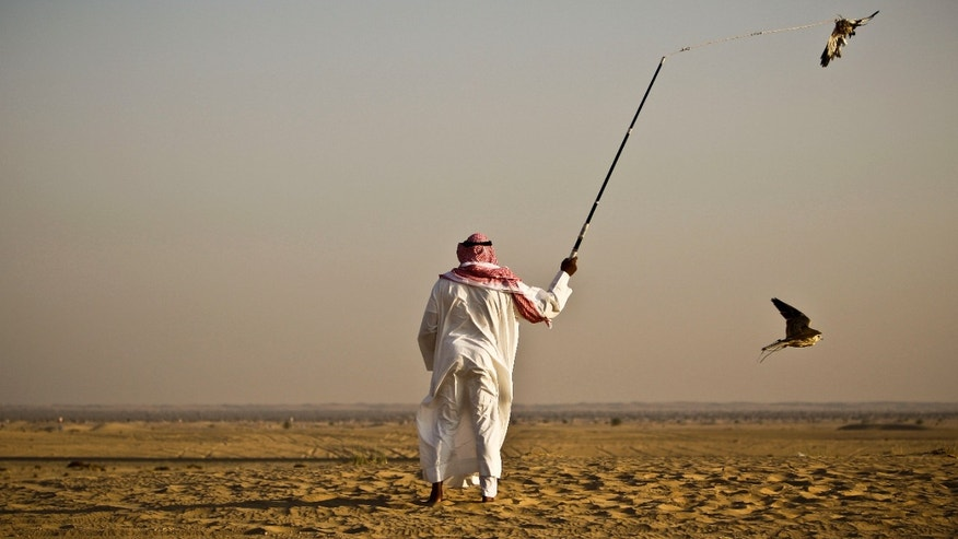 In this Tuesday Nov. 13, 2012 photo, Iraqi professional falcon trainer Abu Badr al-Anazi swings a pigeon body to attract a falcon during a training session on the outskirts of Dubai, United Arab Emirates. While the methods to develop top-quality hunting falcons date back to antiquity, its transition into a modern Middle Eastern passion has brought in microchip tagging and price tags that can run well over $10,000 for a prime bird.(AP Photo/Kamran Jebreili)