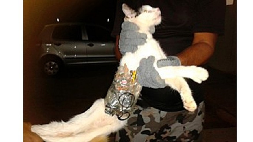 Jan. 5, 2013: A prison guard holds a cat that has objects wrapped around his body with tape at a prison in Arapiraca in this handout photo.
