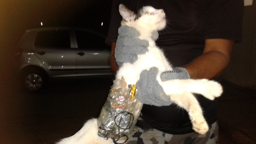 In this photo taken with a cell phone early Monday, Dec. 31, 2012, and released by Brazil's General Superintendency of Prisons of Alagoas (SGAP), guards hold a cat that has items taped to its body at a medium-security prison in Arapiraca, in Alagoas state, Brazil. (AP Photo/SGAP)
