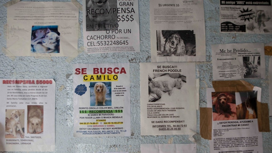 Posters of missing dogs blanket a wall at the animal shelter in the hilltop borough of Iztapalapa in southeast Mexico City, Tuesday, Jan. 8, 2013. The fatal mauling of four people by feral dogs in a Mexico City park set off debate Tuesday about the city's love/hate relationship with its dog population, and the guilt or innocence of 25 dogs trapped near the scene of the nightmarish killings. Liliana Hernandez, a self-described street dog rights activist who lives near the park, says many people let their dogs out during the day because their cinderblock homes are too small to keep them inside. Resident of their neighborhood started running frantically to collect their dogs when police began seizing strays Monday night, she said. A veterinarian at the Iztapalapa animal shelter said it appeared that at least one of the 25 captured dogs had been a pet. (AP Photo/Eduardo Verdugo)
