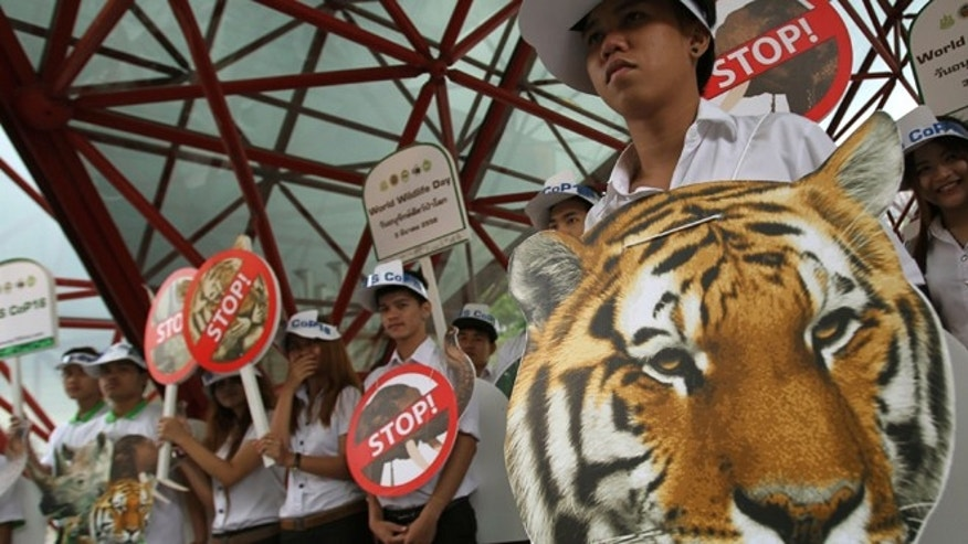 March 3, 2013: Thai activists hold posters urging people to stop the trading of tigers during the Convention on International Trade in Endangered Species, or CITES, in Bangkok.
