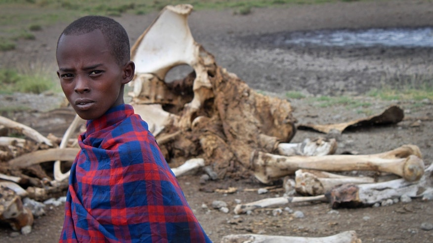 In this Wednesday, Feb. 13, 2013 photo, a Maasai boy stands near the skeleton of an elephant killed by poachers outside of Arusha, Tanzania. Demand for ivory in the Far East, particularly China, is fueling elephant deaths in Africa. Poachers across the continent are slaying the giants and cutting out their tusks to earn wages far beyond what legal daily labor provides. (AP Photo/Jason Straziuso)