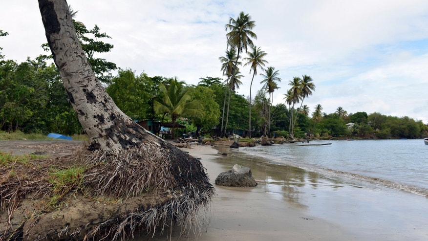 In this April 22, 2013 photo, the stump of an unrooted palm tree sits on the shore of the fishing village in Telegraph, Grenada. The people along this vulnerable stretch of eastern Grenada have been watching the sea eat away at their shoreline in recent decades, a result of destructive practices such as sand mining and a ferocious storm surge made worse by climate change, according to researchers with the U.S.-based Nature Conservancy, who have helped locals map the extent of coastal erosion. (AP Photo/David McFadden)