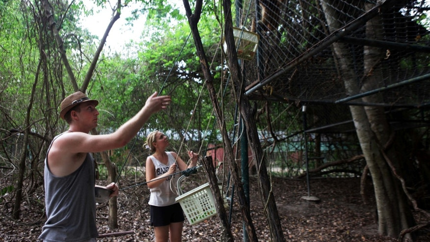 In this Thursday, May 9, 2013 photo, volunteers feed gibbons inside an enclosure at the Wildlife Friends Foundation near the village of Kao Look Chang, Thailand. For more than a decade, the wildlife refuge south of Bangkok has been rehabilitating and caring for animals abandoned or abused by their owners. (AP Photo/Jon Col Jin)
