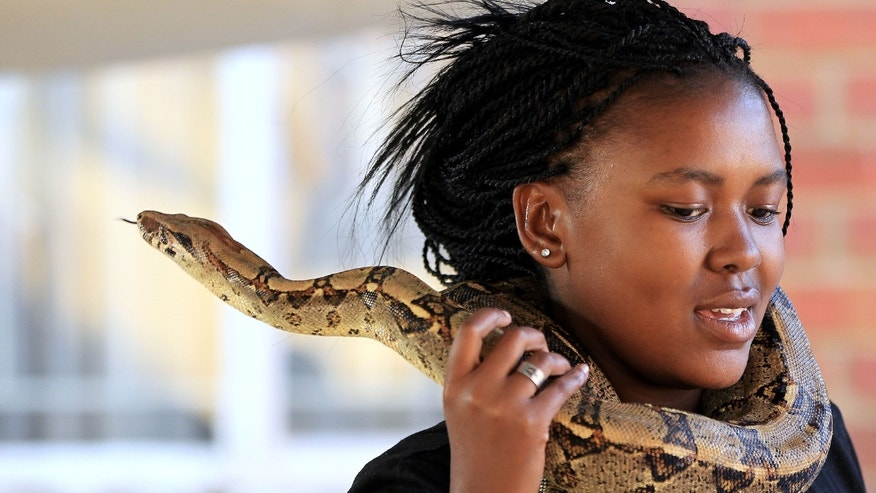 "Photo taken Tuesday May 14, 2013 of Nolwandle Duma with ""Landi"" a Boa Constrictor snake draped around her neck outside the home she shares with her mother in Soweto, South Africa. The home-turned museum of former President Nelson Mandela, attracts tourists to to see their collection of non venomous snakes. Duma, assist her mother Lindiwe Mngomezulu, unseen, in show off the snakes that they keep in their home. For a small fee visitors are welcomed inside their home to view and interact with their collection. (AP Photo/Themba Hadebe)"