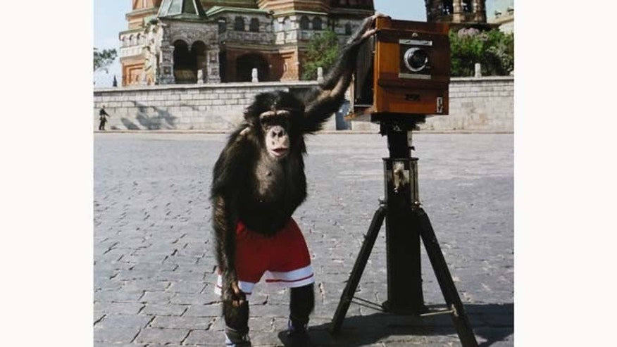 This undated image shows the chimpanzee Mikki taking photos in Red Square Moscow.