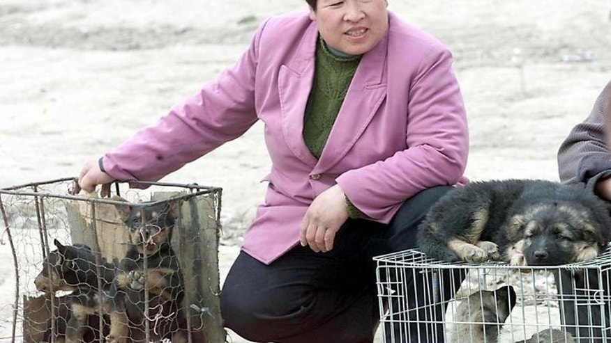 A vendor waits at a corner of a makeshift dog market in the suburb of Beijing with various mongrels in cages for sale to dog meat lovers on April 1 2001. A festival dedicated to dog meat in southern China has been targeted by protesting animal lovers, who have won a minor concession from local officials, an activist said